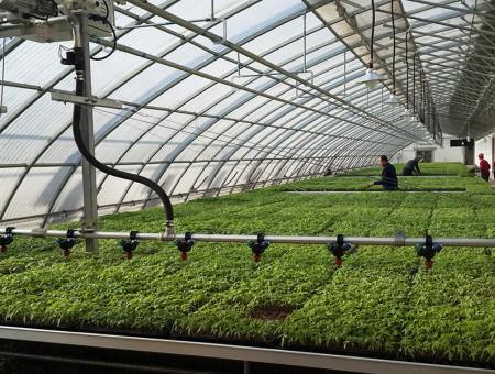 夏季温室大棚降温的方法有哪些?